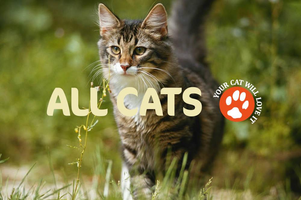 AllCats_02.jpg