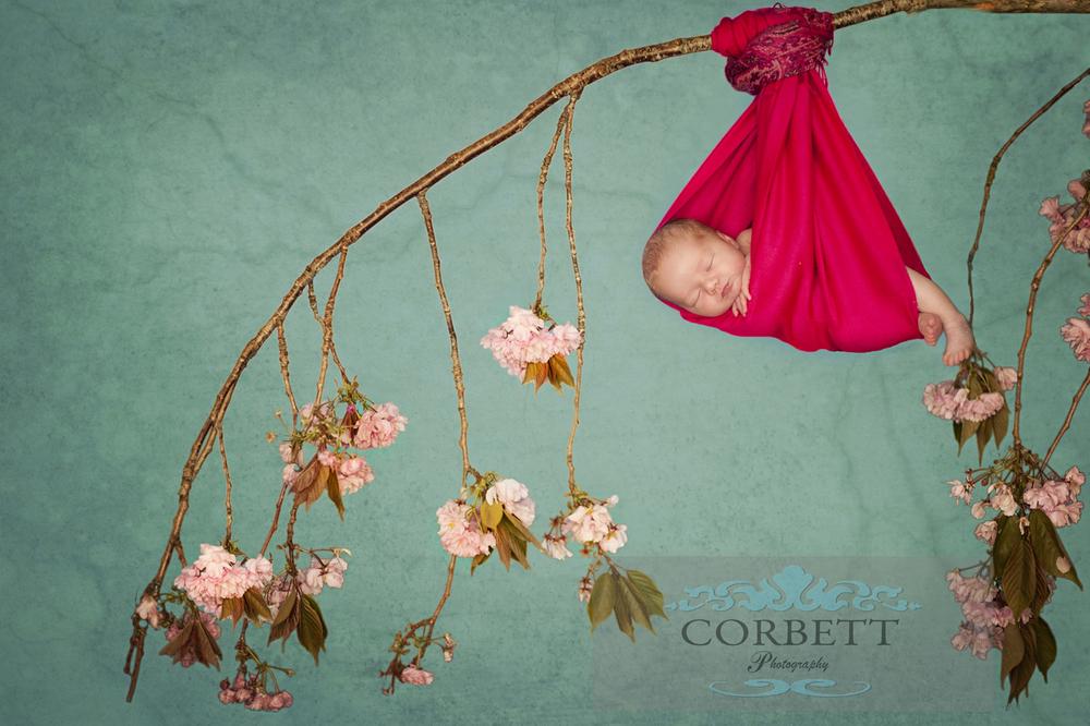 newborn baby, blossom tree
