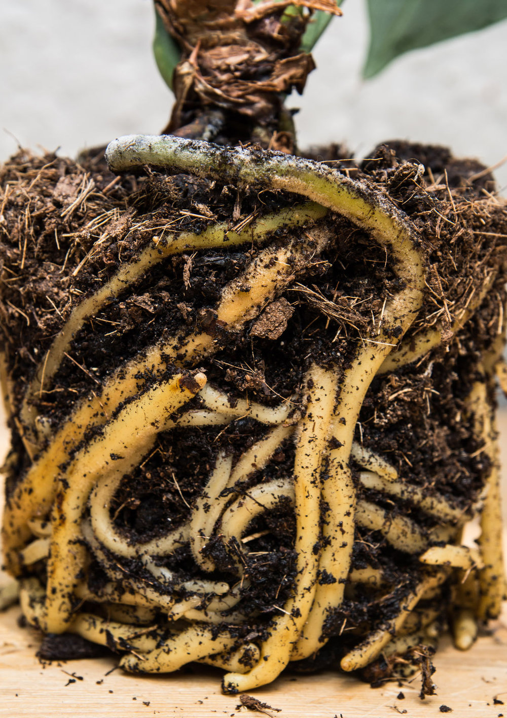 Plant: eigen