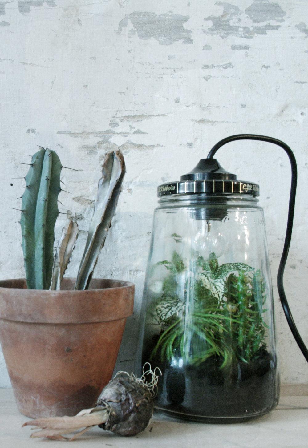 Plantlamp-concept.jpg