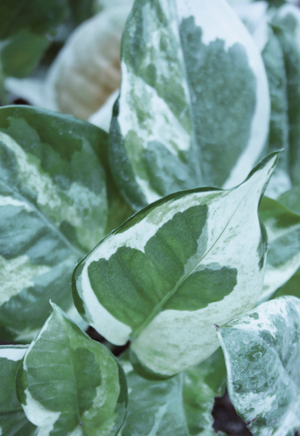 foto-plant.jpg
