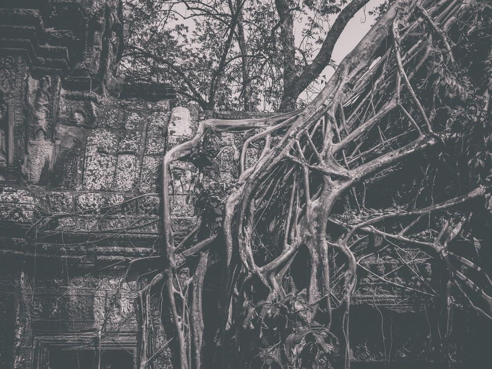 treeroots.jpg