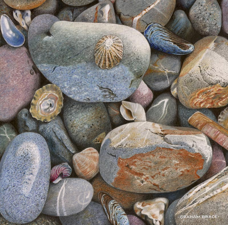 Pebbles and shells by Graham Brace