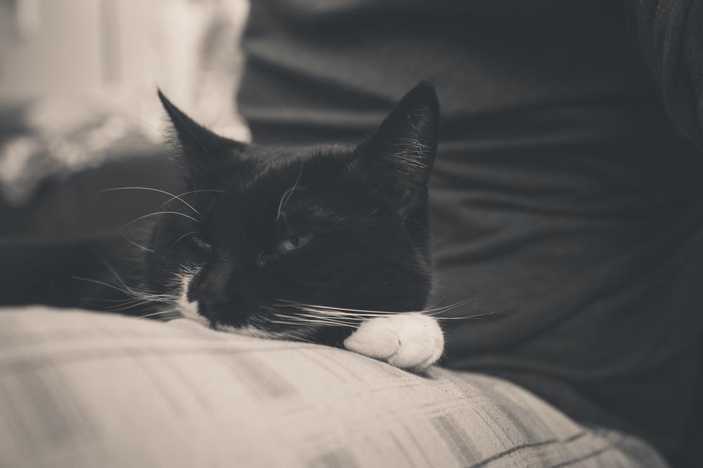 Day 24 - Sleepy Kitty