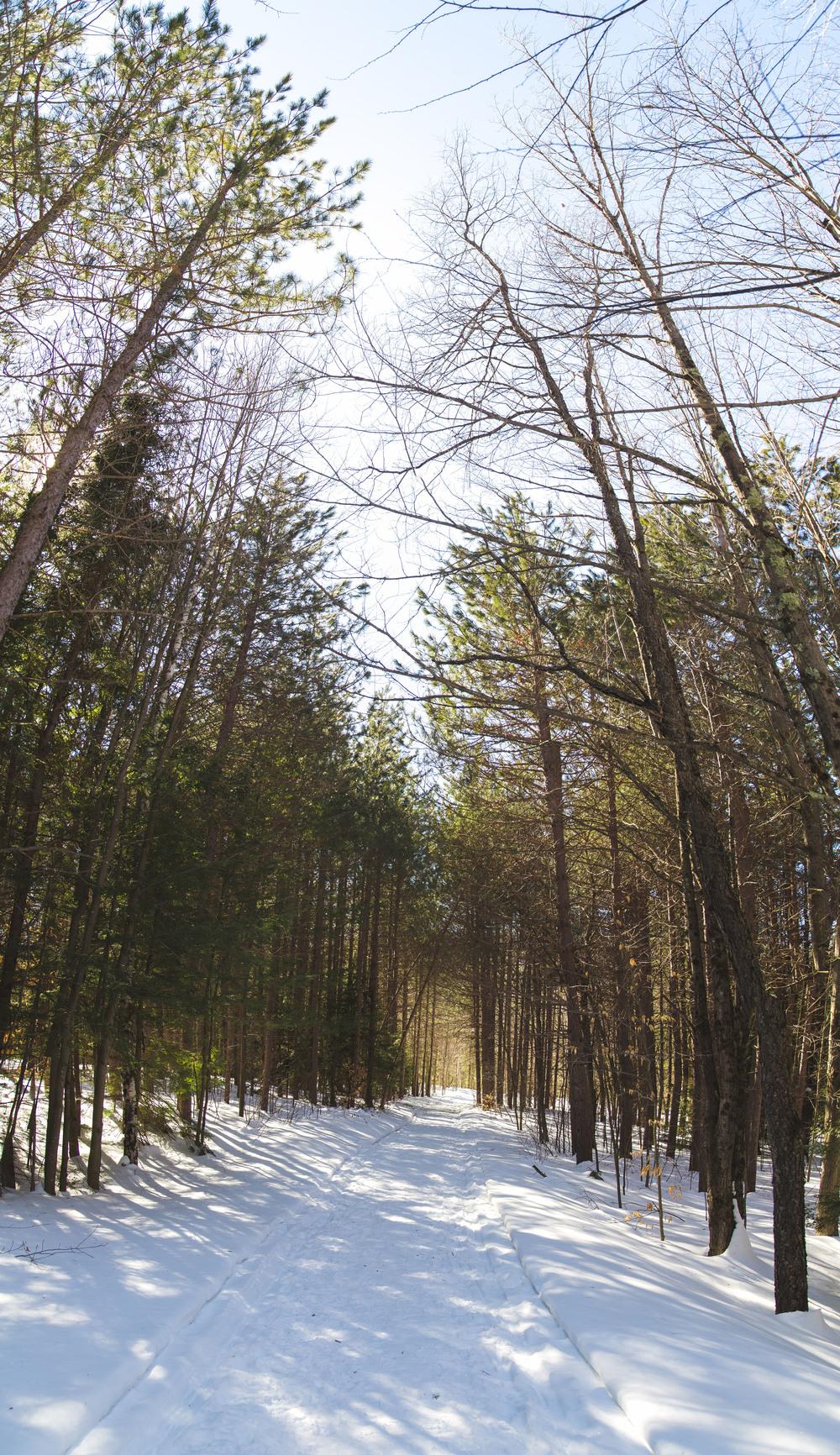 Dippi Path.jpg