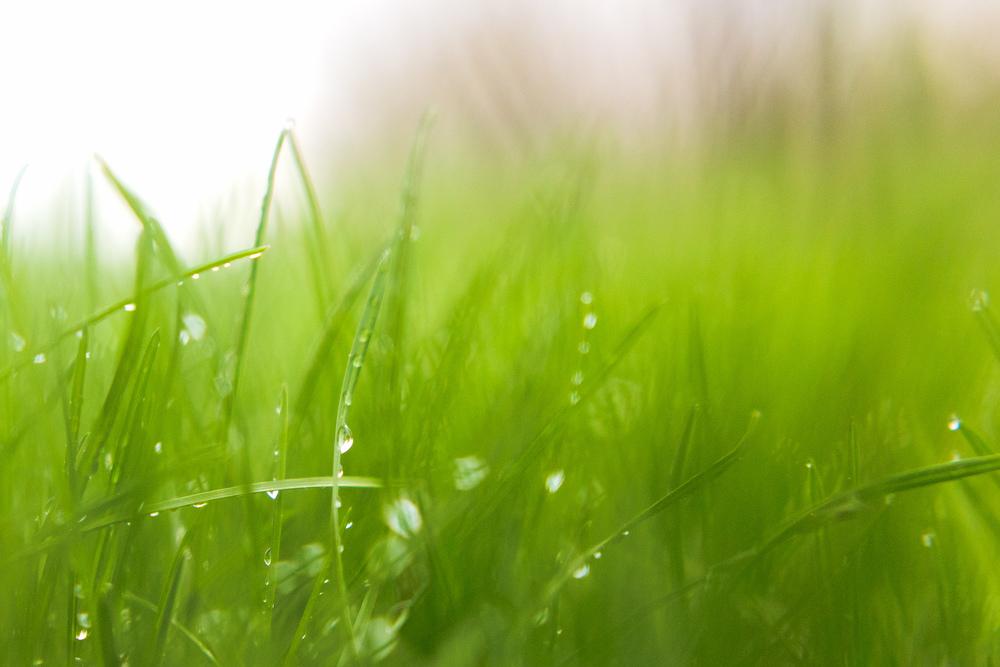 Day 120 - Spring Rain