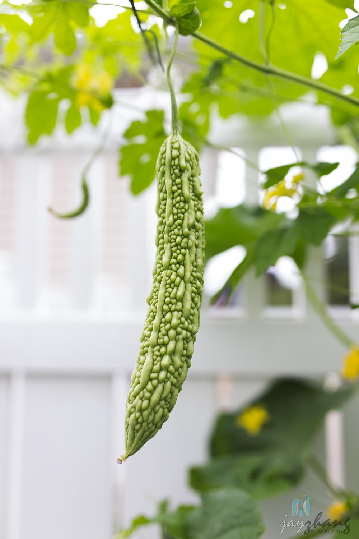 Day 206 - Cucumbers