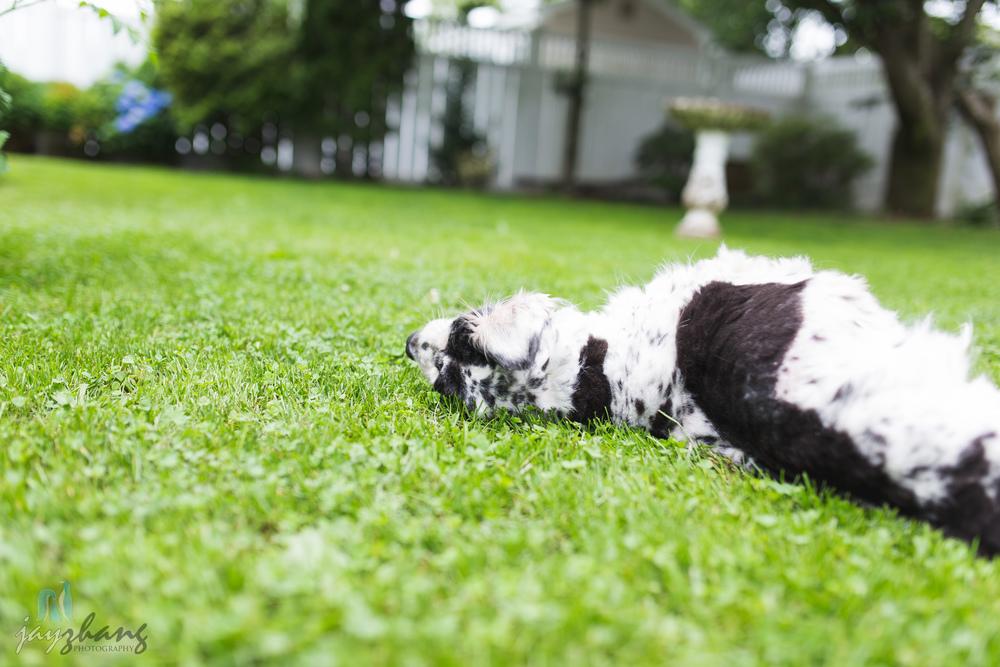 Day 207 - Old Puppys-7.jpg