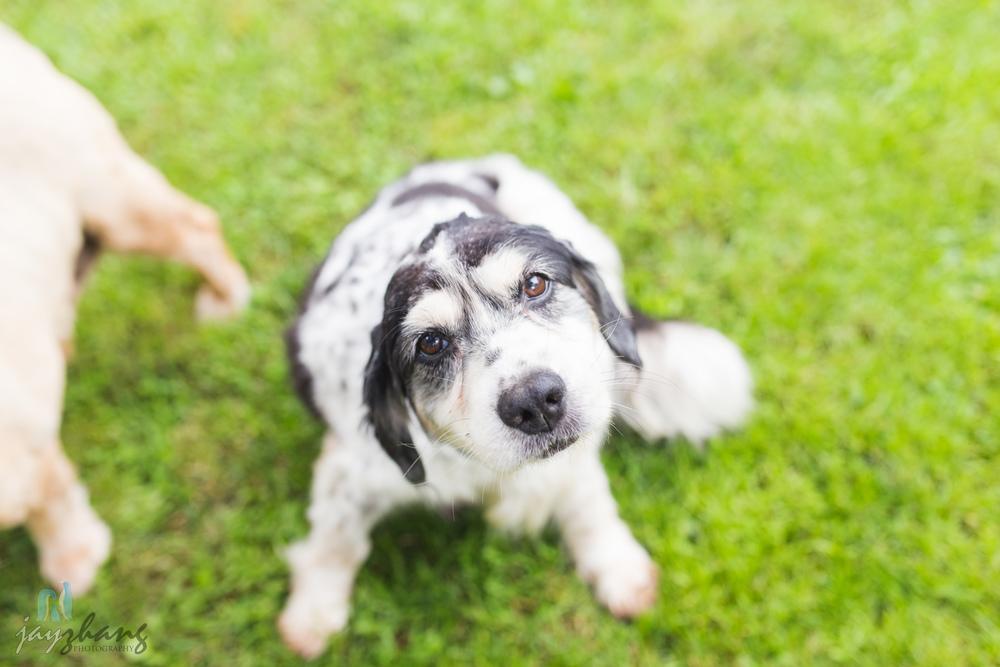 Day 207 - Old Puppys-10.jpg