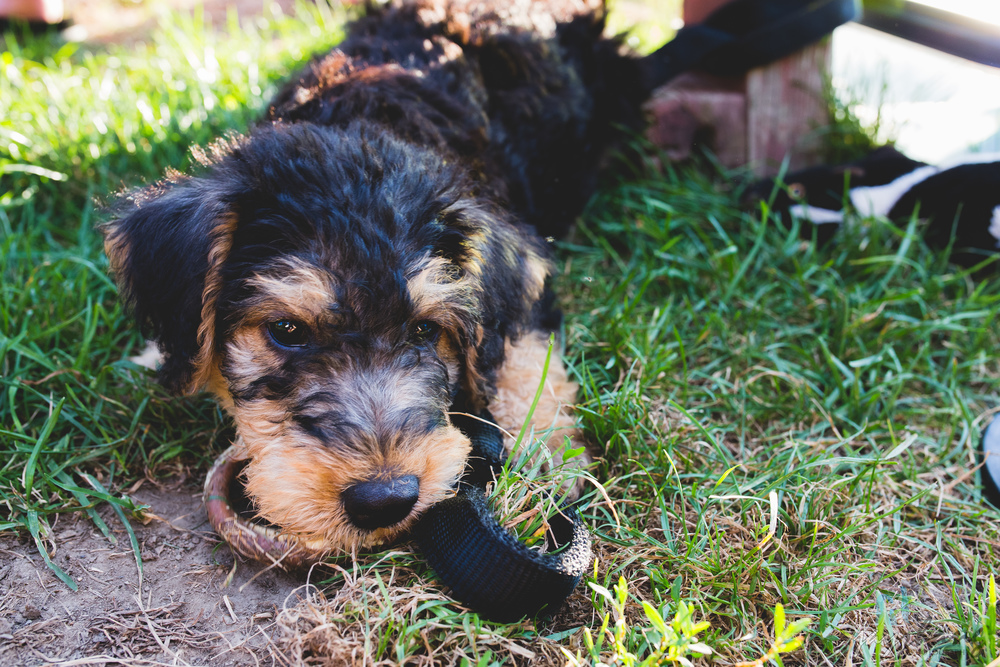 Day 227 - New Pup 2