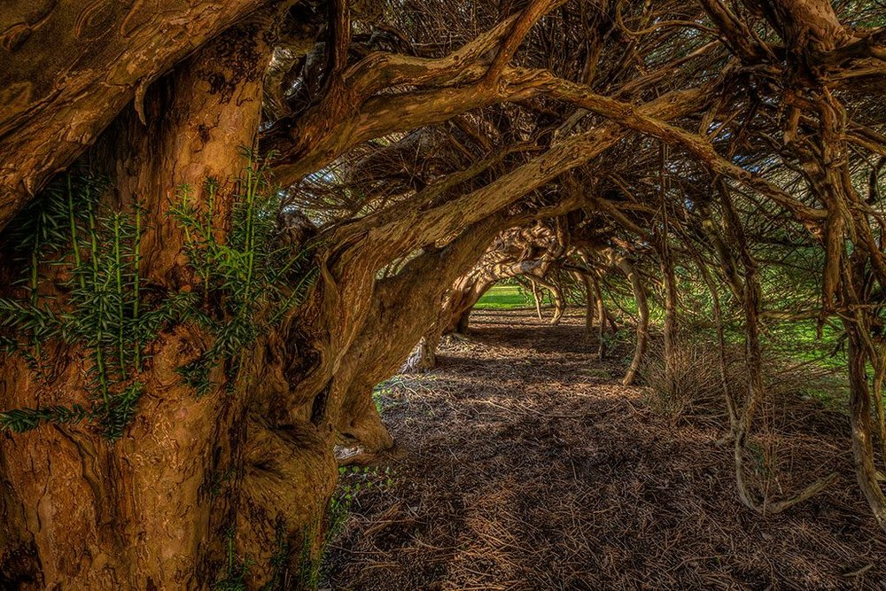 Yew-Tunnel.jpg
