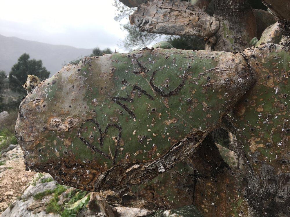 Thanks for trashing this cactus tree, Mr/mrs 'BMC'. Classy.