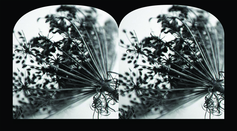 no 2 queens anne lace  stereoscope template.jpg