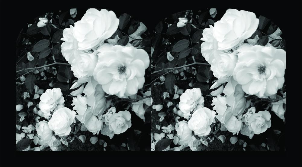 no 4 rose stereoscope template.jpg