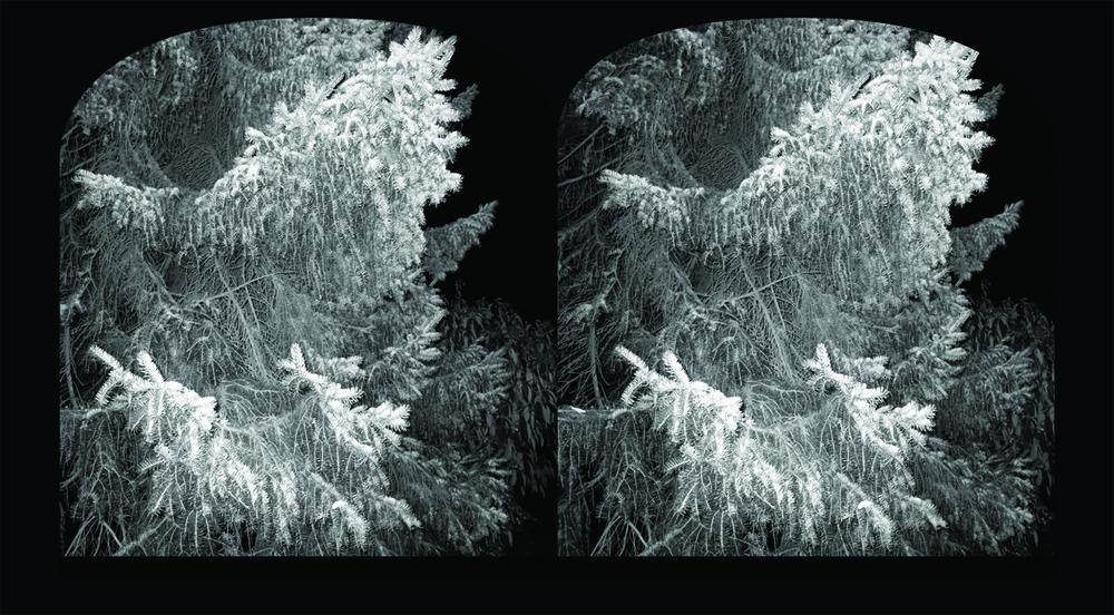 no 25  fir  steroscopic template.jpg