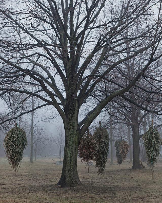 New Landscape (Hanging Tree).jpg