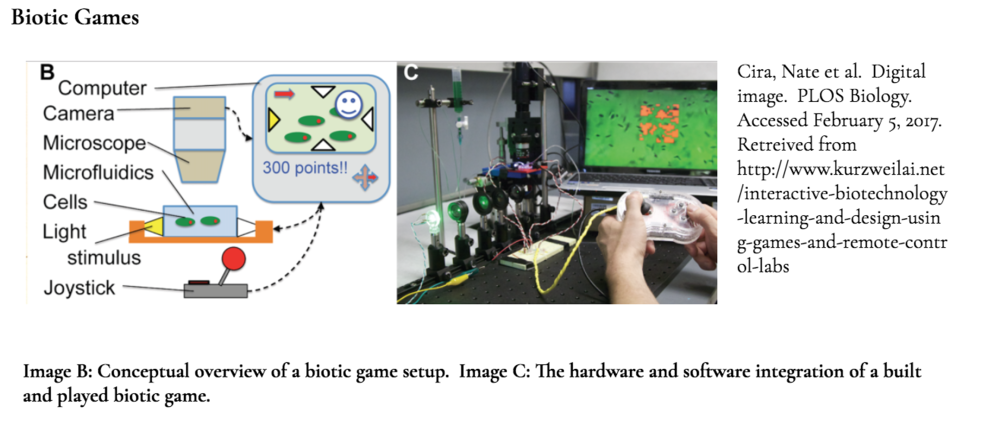 This project is also highly inspired by the work of Ingmar H. Riedel-Kruse, Alice M. Chung, Burak Dura, Andrea L. Hamilton and Byung C. Lee and their work on biotic games.  Taking advantage of a variety of biological processes, they designed a collection of games in which live microorganisms such as paramecia are used as avatars for game play.