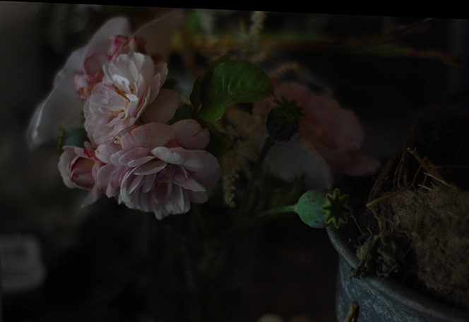florece.jpg