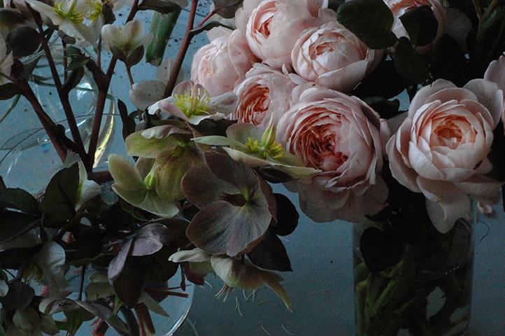 roses bores.jpg