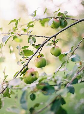 Fern Croft_Orchard_10.jpg