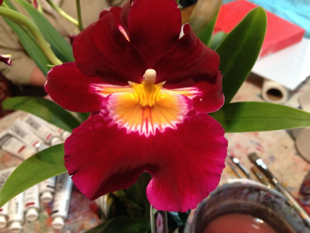 A gorgeous orchid! Look at that rich colour!