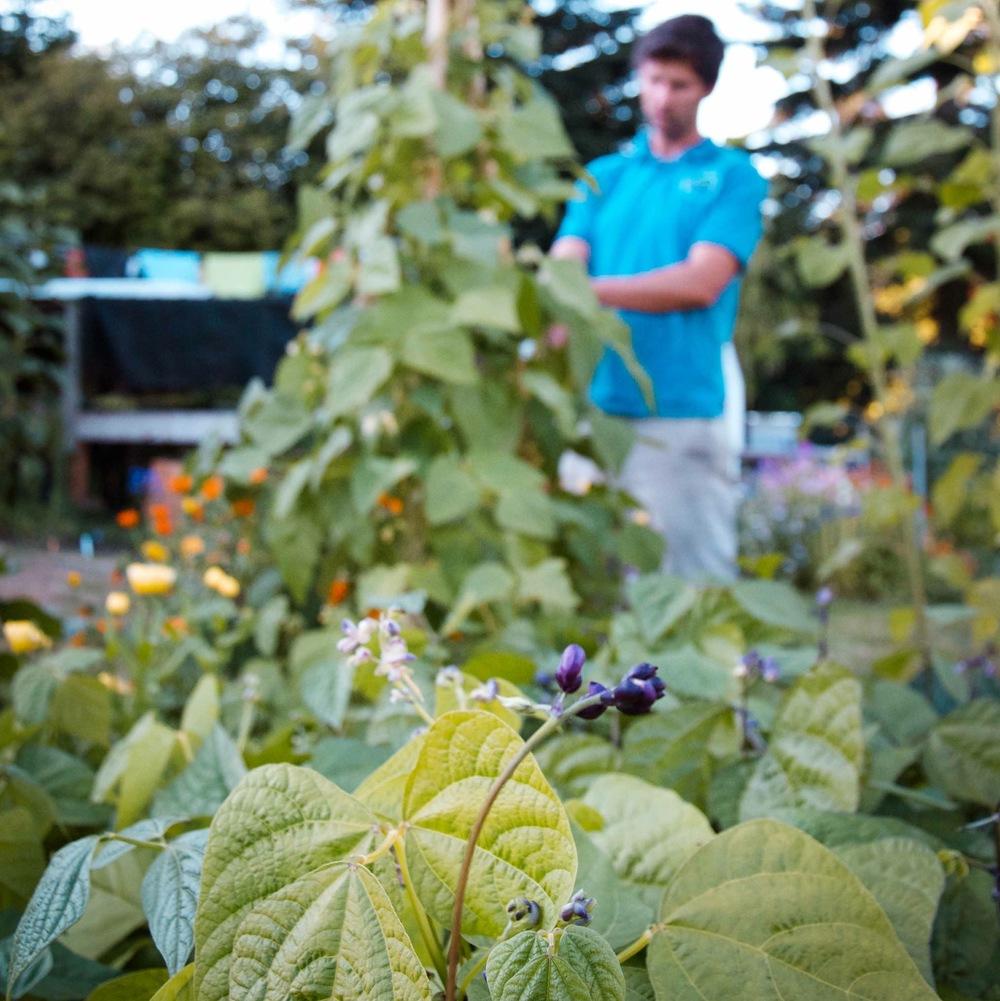 Seattle Urban Farm Company_Edible Garden Maintenance
