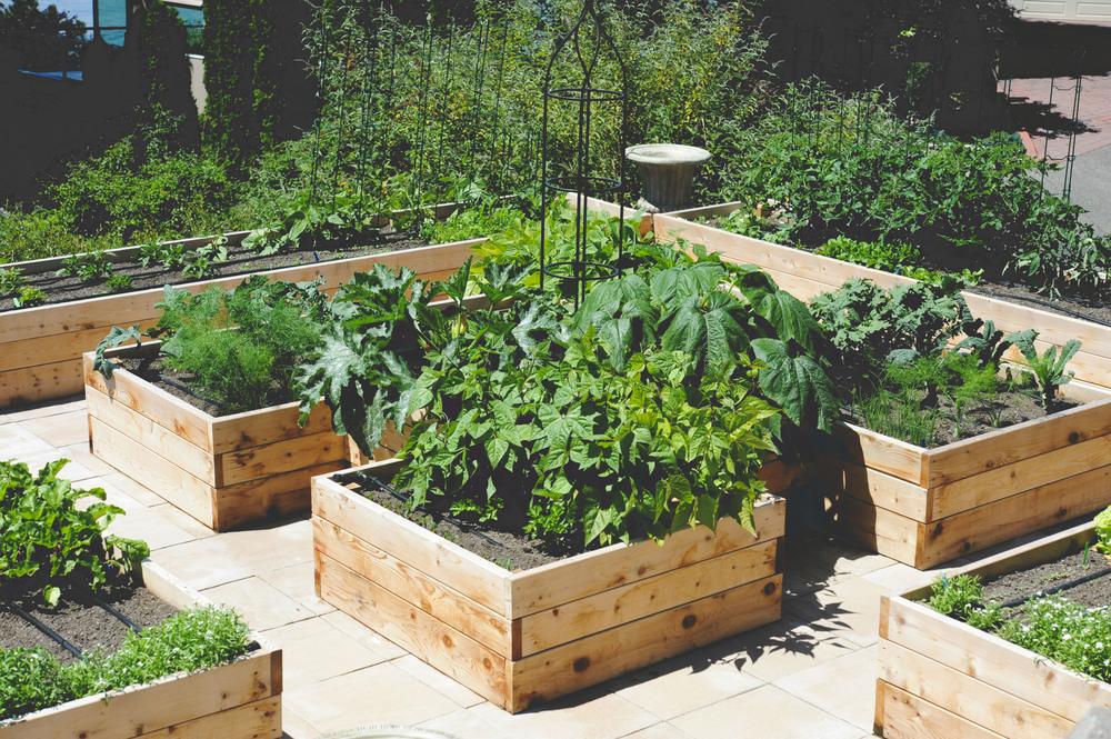 Magnolia Rooftop Kitchen Garden — Seattle Urban Farm Company