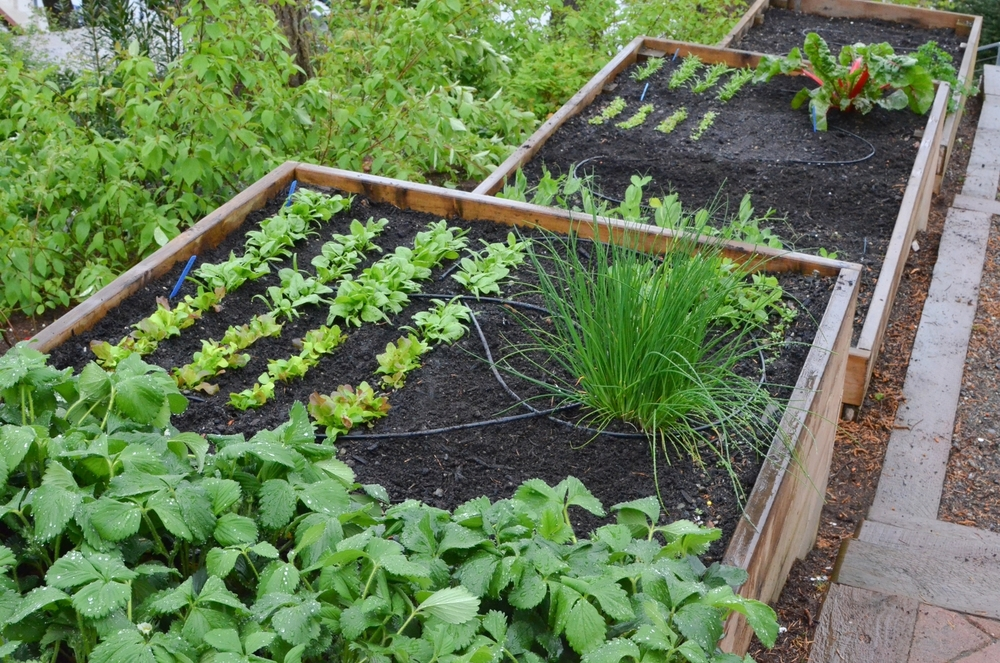 Terraced Bellevue Garden_Seattle Urban Farm Co.
