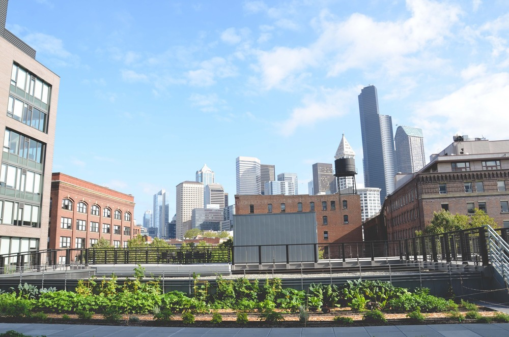 Seattle Urban Farm Company_Quality Athletics_Restaurant Farm_View.jpg