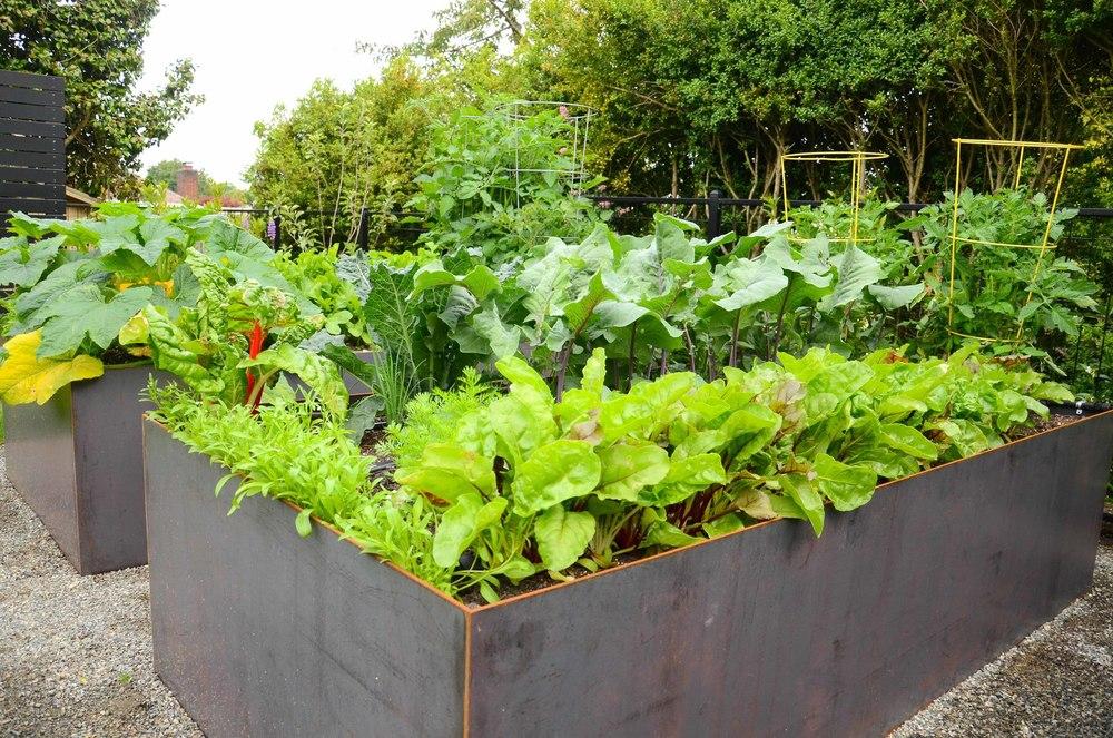 Queen Anne Steel Raised Bed Garden Seattle Urban Farm