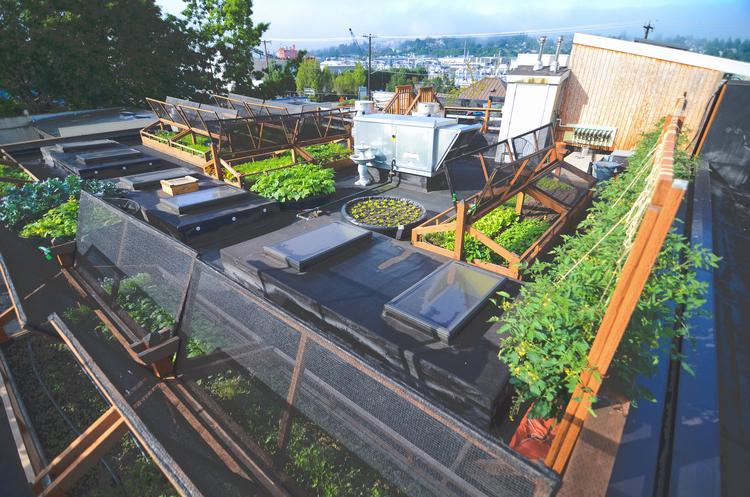 Bastille Rooftop Restaurant Vegetable Garden2 Seattle Urban Farm Company