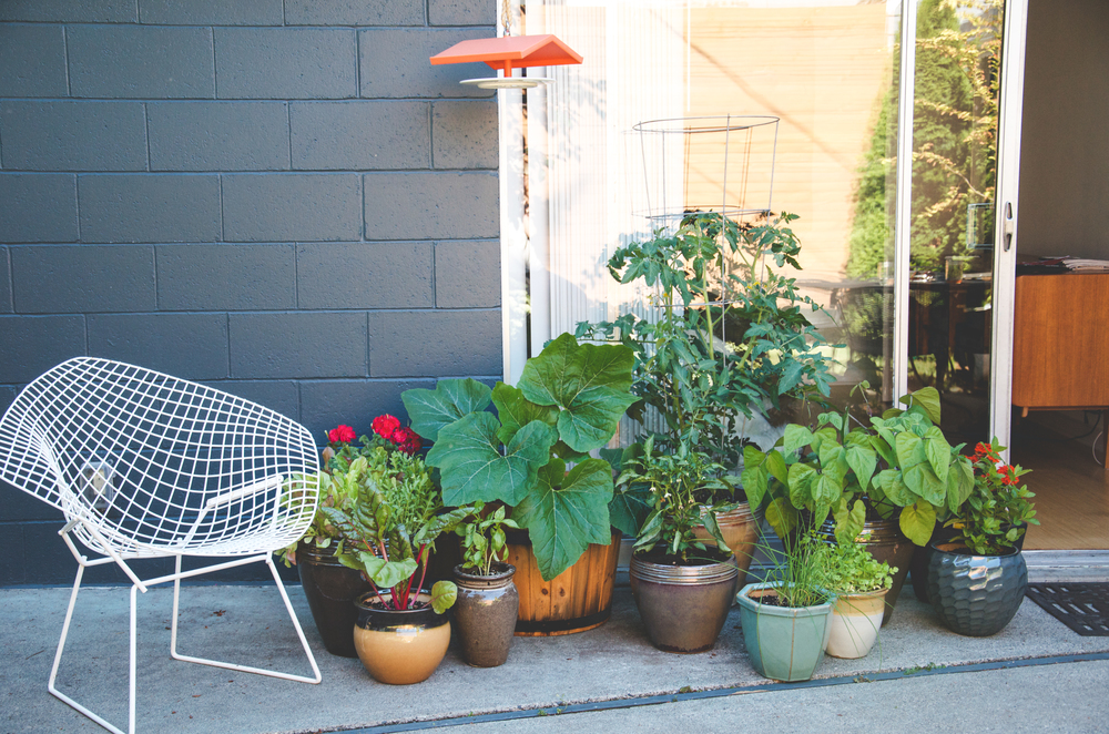 Backyard Urban Farm Company :  Garden in under 15 Square Feet ? Seattle Urban Farm Company