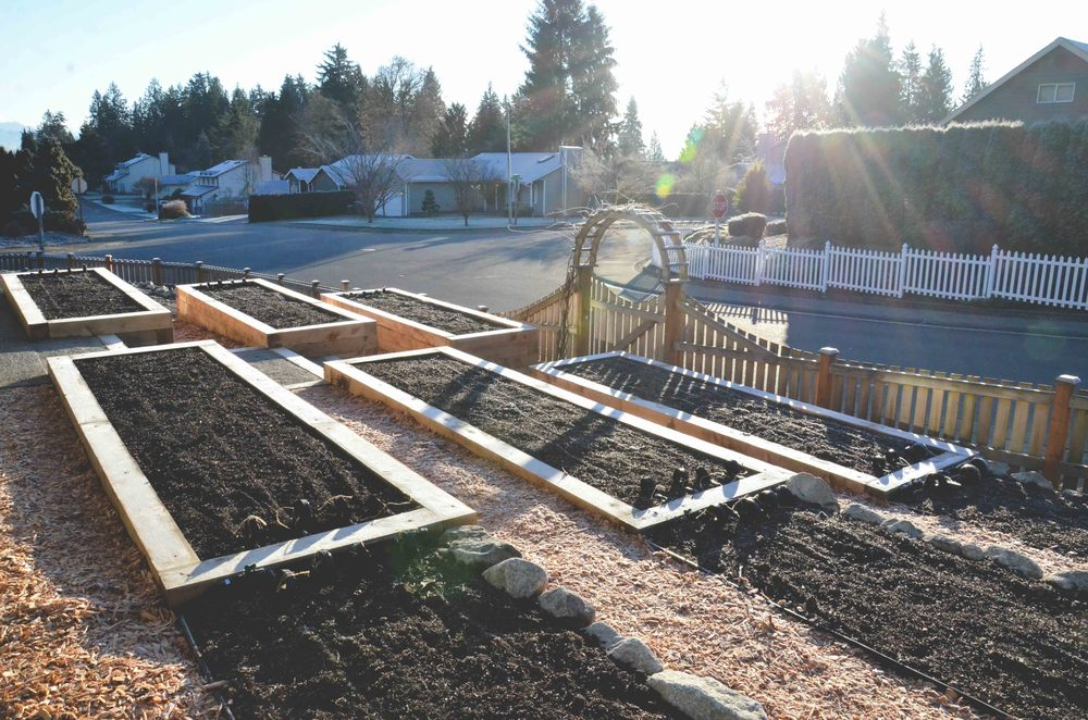 Juniper Timer Raised Beds by Seattle Urban Farm Co