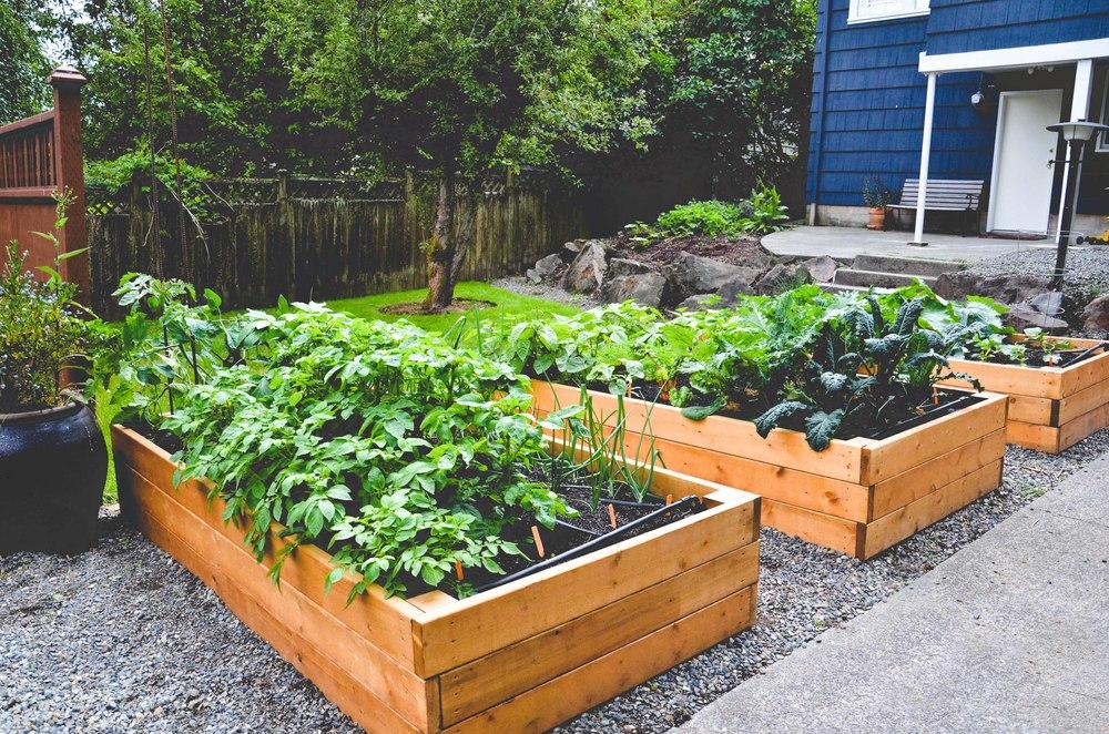 Urban Farm Backyard Ideas : Site Selection for Edible Gardens by Seattle Urban Farm Co