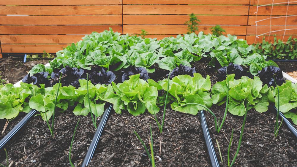 Seattle urban farm company for Vegetable garden maintenance