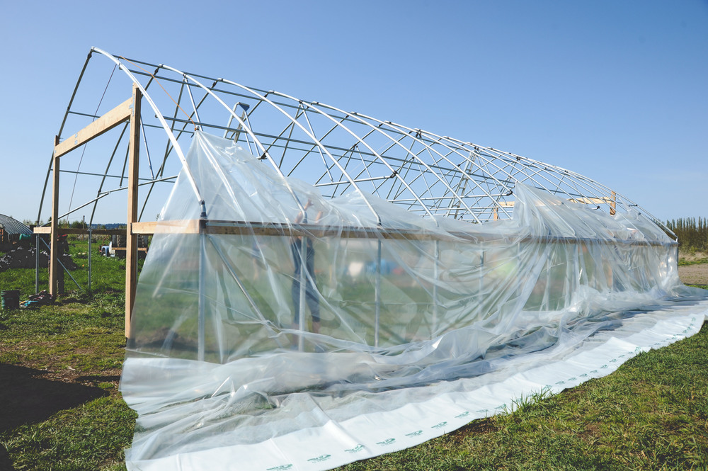 New Greenhouse at Seattle Urban Farm Co's Urban Fringe Farm _Restaurant Farm