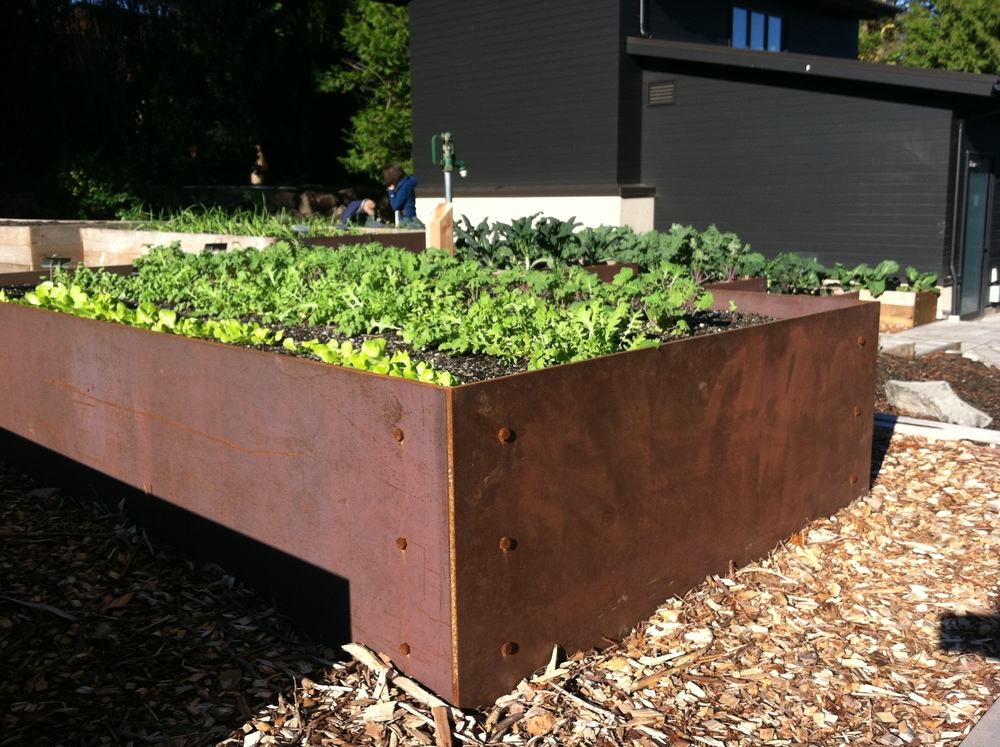 Raised Bed Steel.JPG