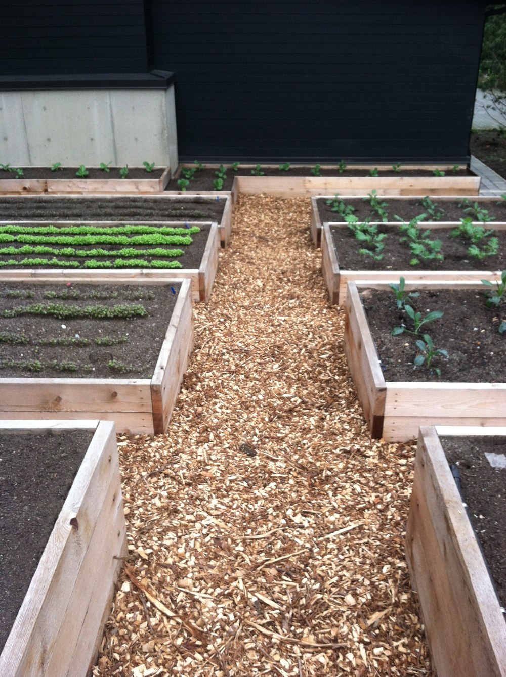 Raised Beds Rough Cut Cedar and Cedar Chip Pathway.jpg