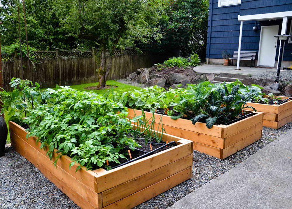 Raised Beds Conventional Cedar.jpg