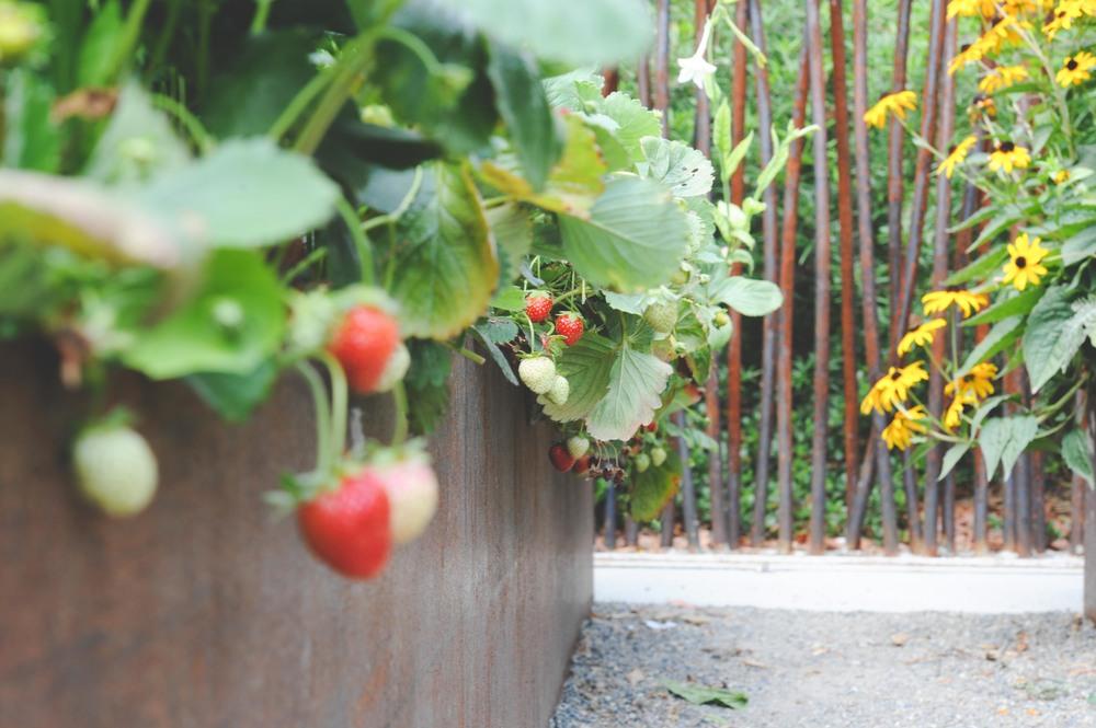 Strawberries_Parfait_web.jpg