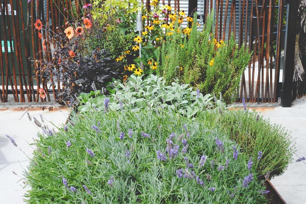 herbs and flowers_Parfait_web.jpg