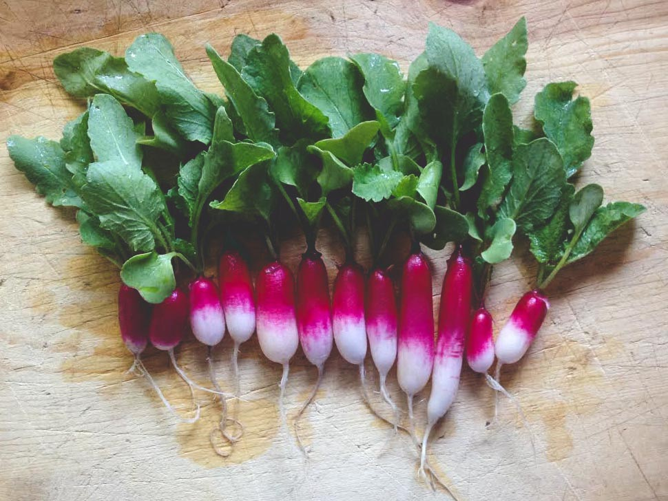 French Breakfast Radish_Seattle Urban Farm Co.