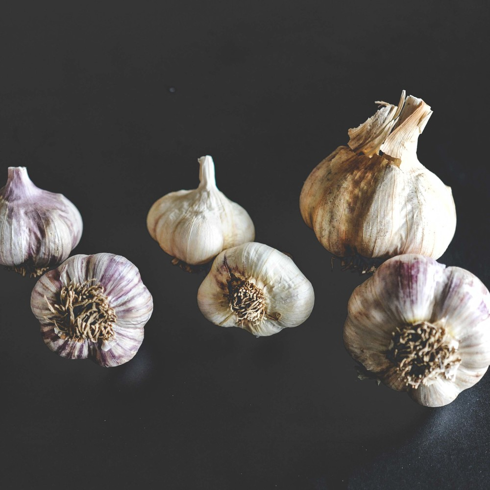 Garlic  HARDNECK: Red Razan, Georgian Fire, and Chesnok Red SOFTNECK: Polish White, French Pink // All varieties grow best after prolonged exposure to cold temperatures.