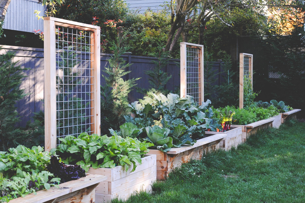 Ideal Cedar Raised Beds with Permanent Trellising — Seattle Urban Farm  VV44