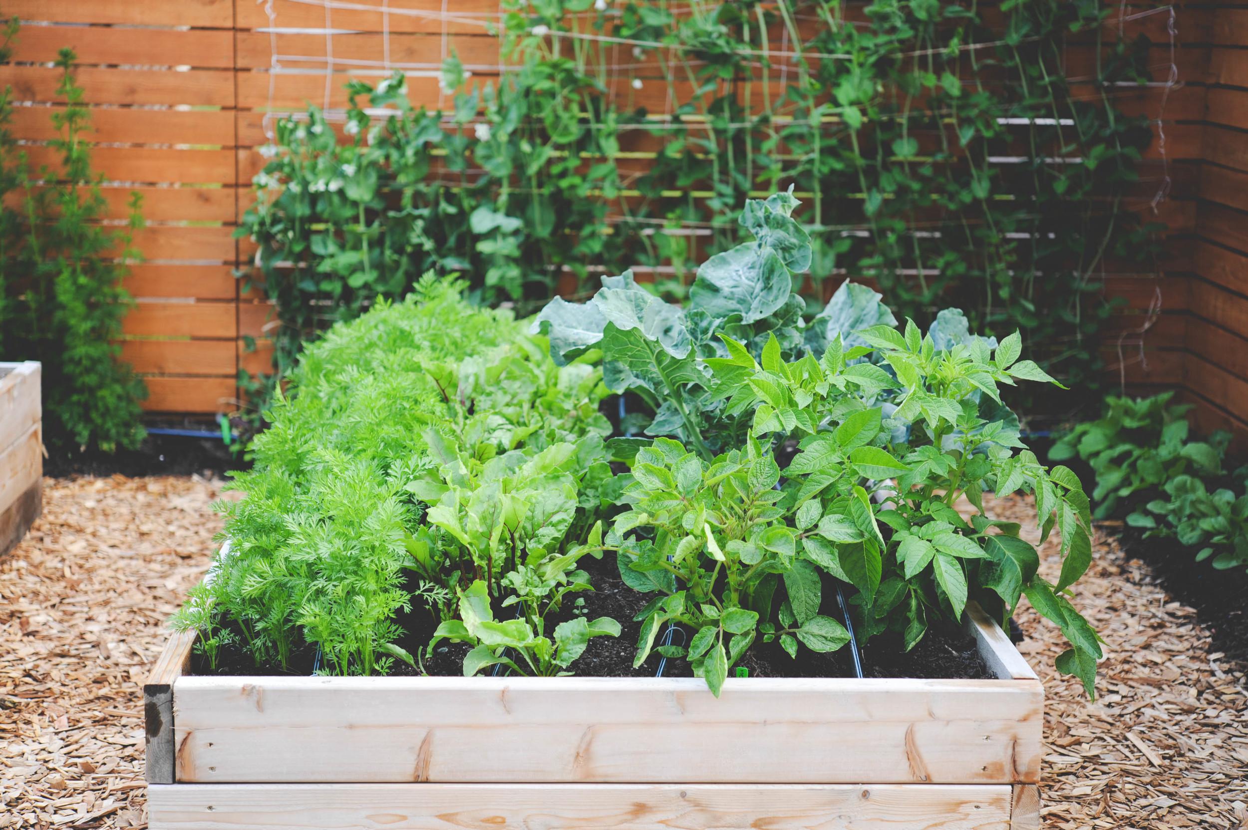 Planting Calendars for Home Gardeners — Seattle Urban Farm