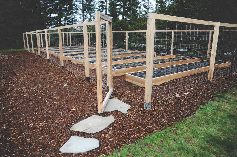 Attractive Raised Bed Perennial Garden With Deer Fence 2