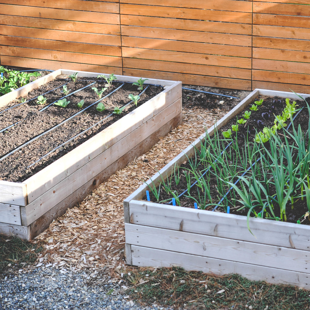 Spring garden with drip tape irrigation