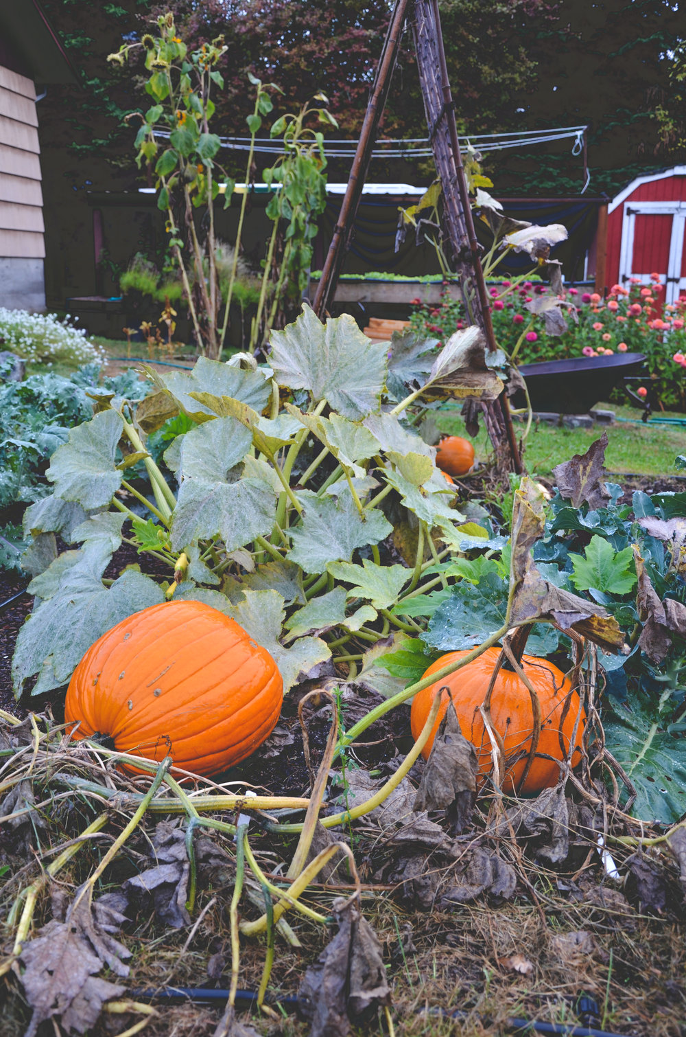 winter squash_blog.jpg