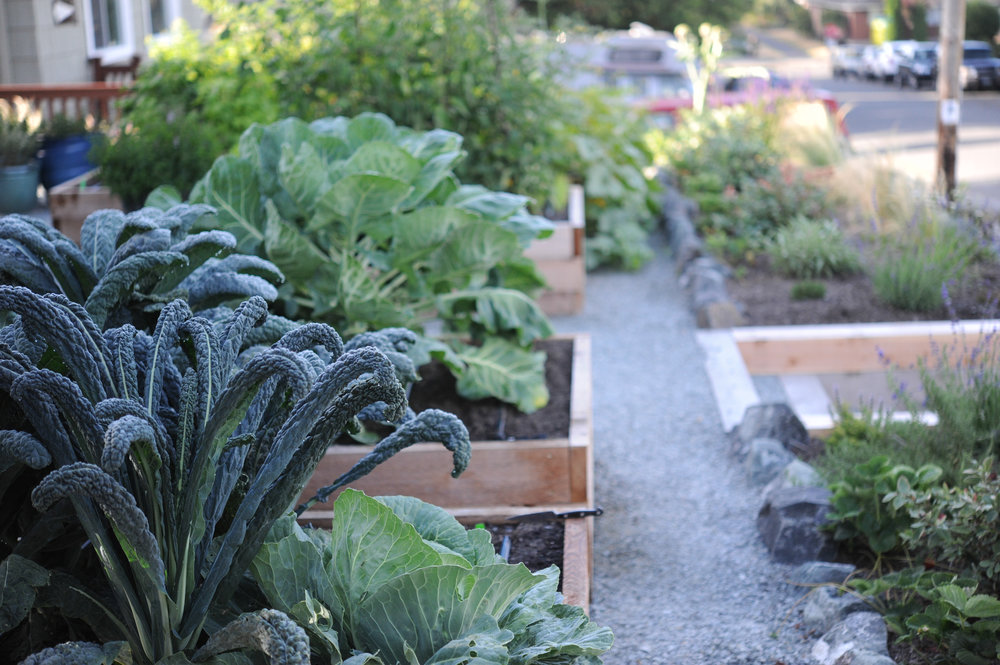 Healthy summer garden_Seattle Urban Farm Co.