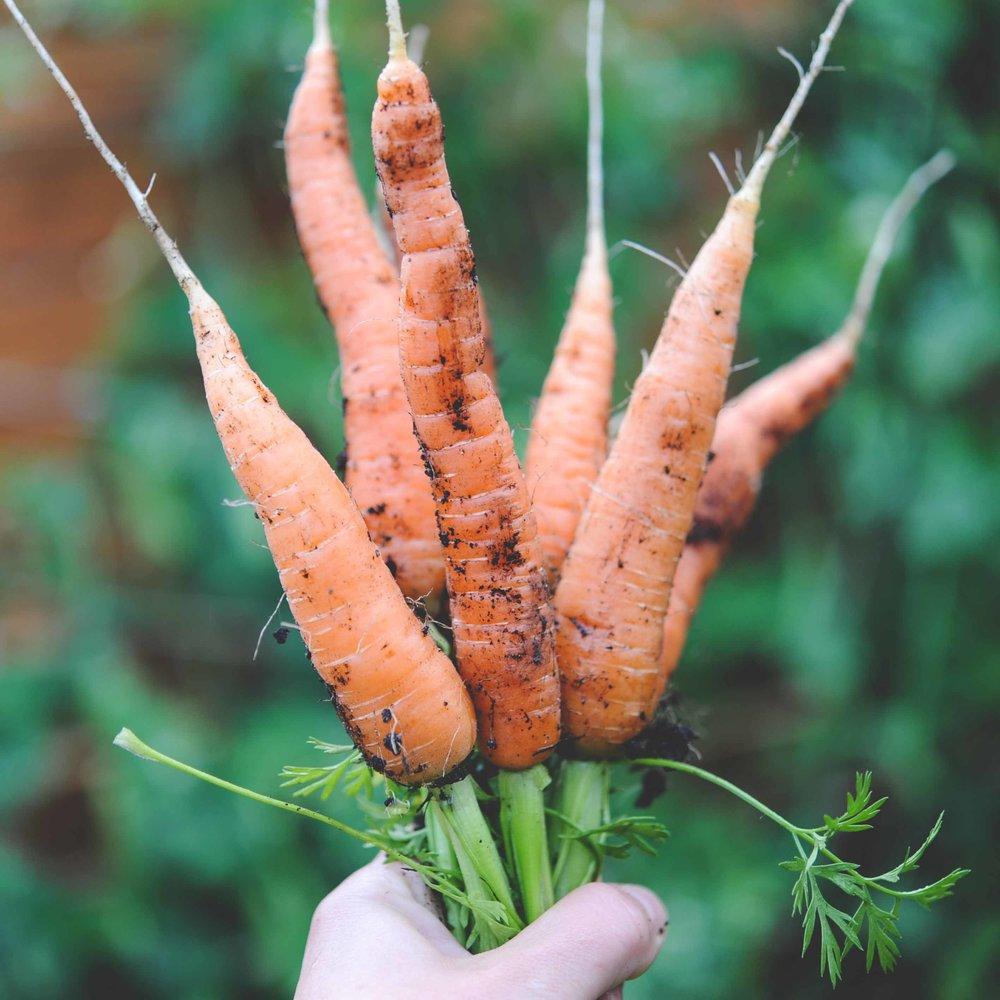 'Nelson' carrots